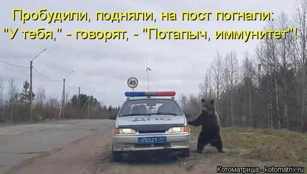 kotomatritsa_H (700x397, 250Kb)