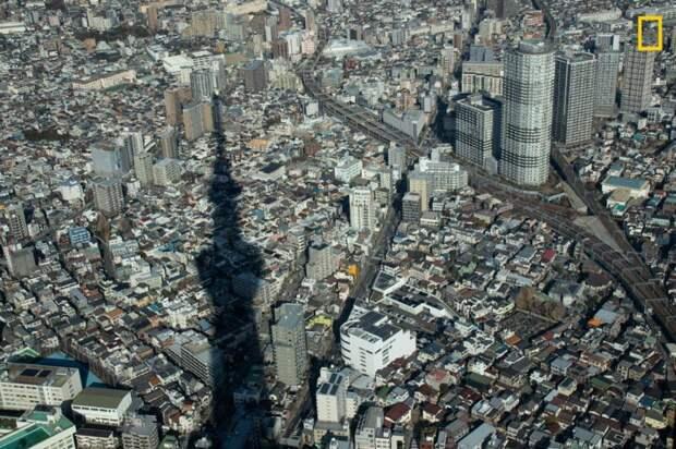 Вид с телевизионной башни в Токио, Япония (Фото: Марк Ву) national geographic, животные, конкурс, конкурсант, путешествие, фотография, фотомир