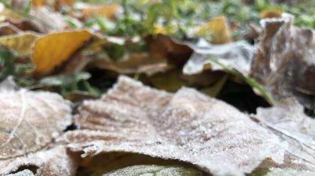 Жителей Подмосковья предупредили о ночных заморозках