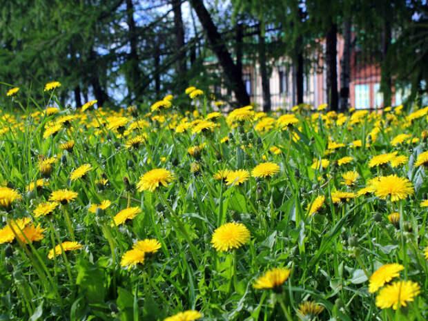 Глава Гидрометцентра спрогнозировал погоду на конец мая