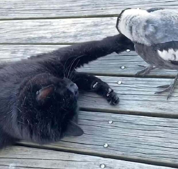 Кот и птица