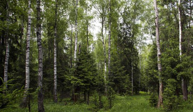 Молодой смешанный лес