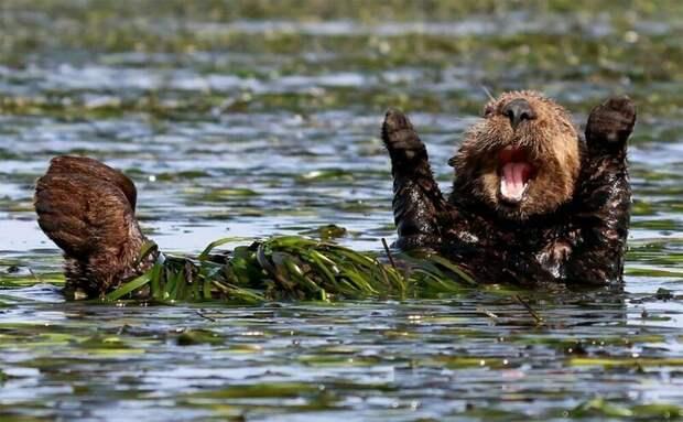 Мое болото - это полный восторг
