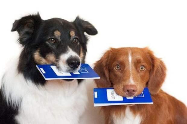 Депутаты предлагают ввести регистрацию домашних животных с последующим налогообложением