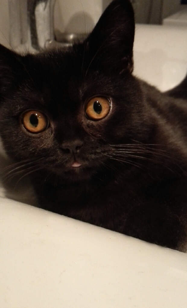 7. Черныш котики, мимими