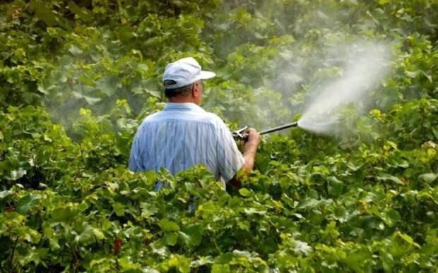 Советы бывалых садоводов: как ухаживать за виноградом весной