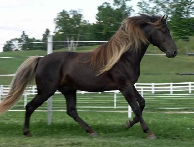 Игреневая животные, лошадь
