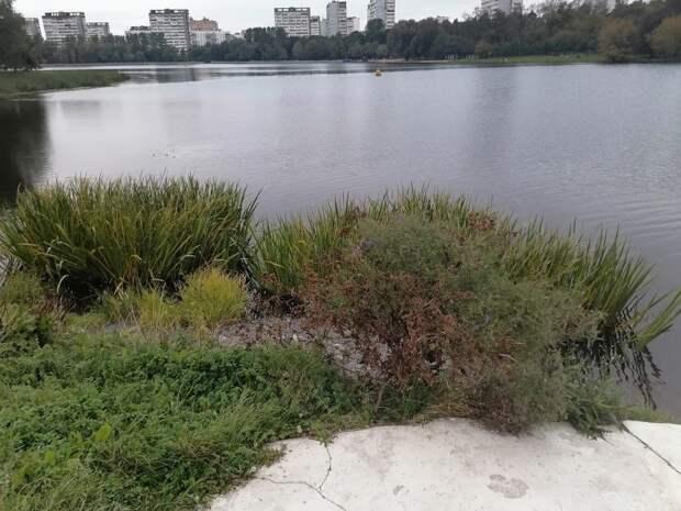 Фото дня: осенняя растительность Головинских прудов