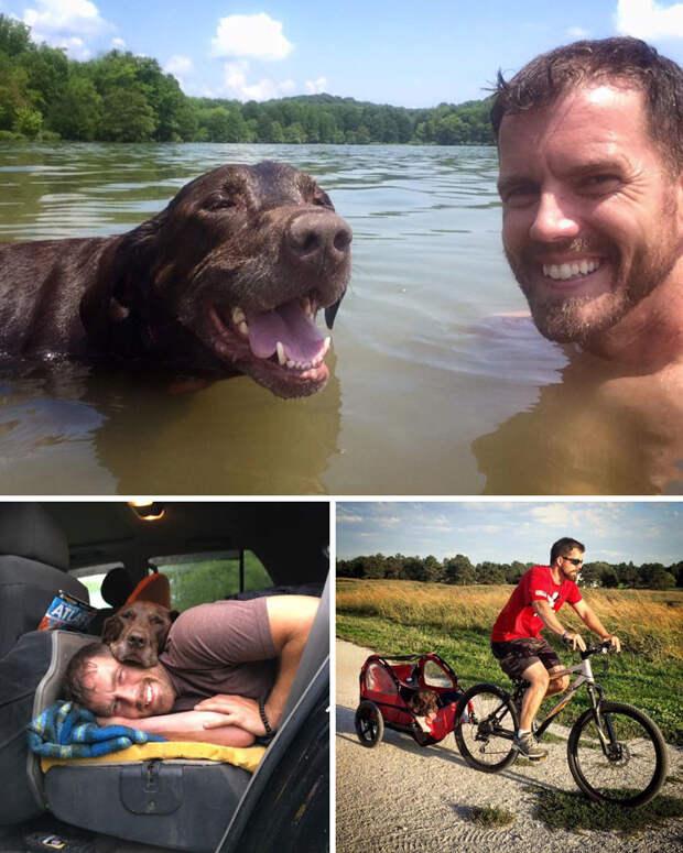 После того, как у пса диагностировали рак, хозяин устроил ему грандиозное путешествие Счастливый конец, животные, спасение