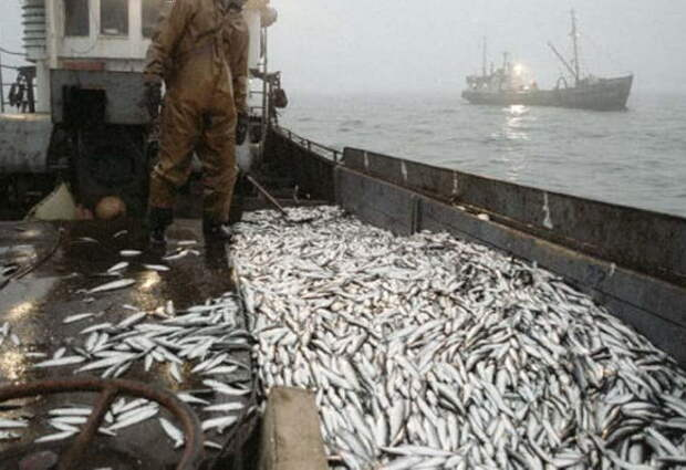 Россия готовится строить крупнейшее рыбоперерабатывающее предприятие