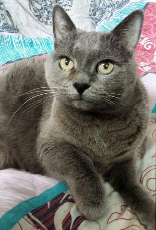 В приюте эта домашняя непривитая кошка просто не выживет. Ситуация безотлагательная.