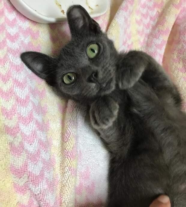 Уродливая уличная кошка с огромным животом превратилась в настоящую красавицу