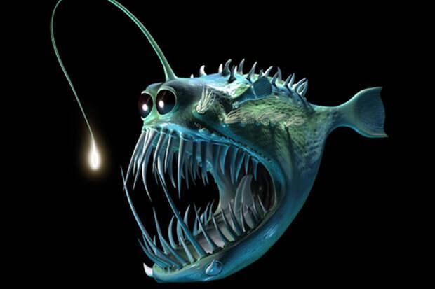 Марианская впадина: существа из черной бездны