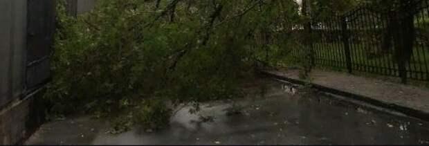 Сломанное дерево спилили во дворе на Красноказарменной