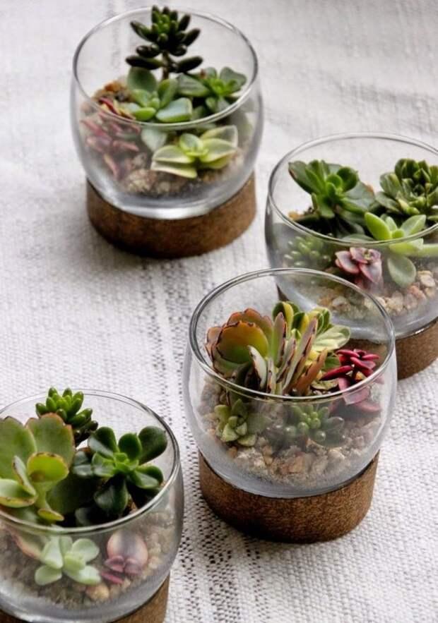20 маленьких садов, которые поместятся в ладошке