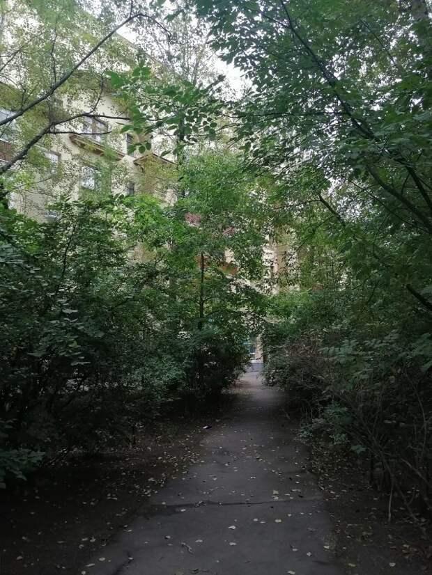 Фото дня: тенистые тропы проезда Черепановых