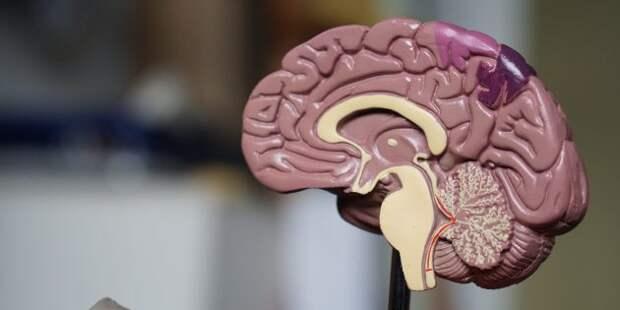 10 органов, без которых люди на самом деле могут и обойтись