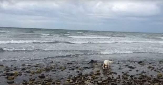 Рыбак пошел на зов собаки и оказалось, что не зря — она хотела спасти дельфина