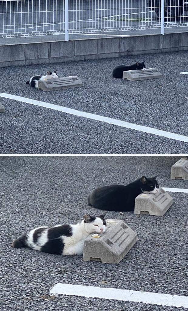 Кошки и парковочные бамперы