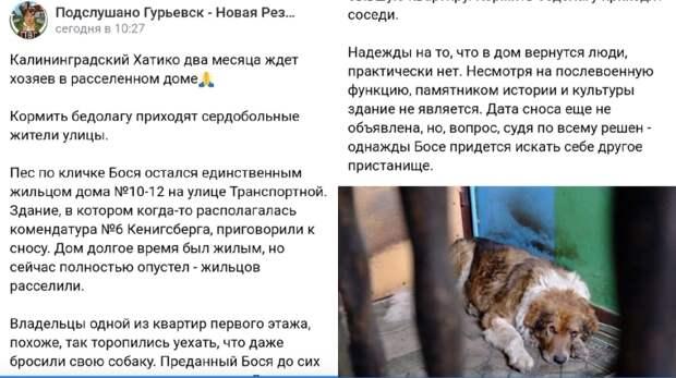 Калининградский Хатико два месяца ждет хозяев в расселенном доме