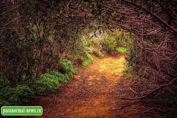 Жуткие случаи утраченного времени и пространственных сдвигов в лесу