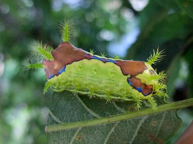 10 жутких насекомых Японии