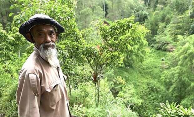 В деревне высмеивали сажавшего деревья старика. Через 25 лет его упорство спасло регион от засухи