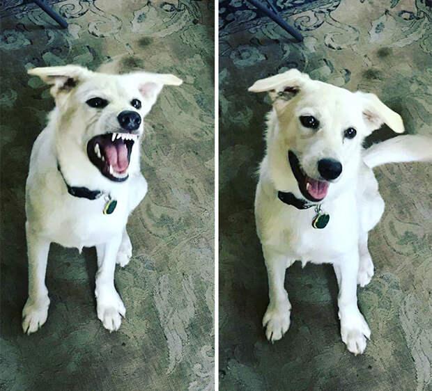 «Хороший мальчик»: питомцы до и после добрых слов хозяина