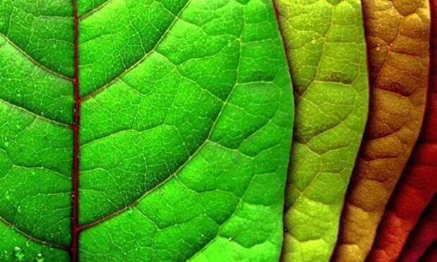 Почему желтеют листья: 13 причин + факторы влияния