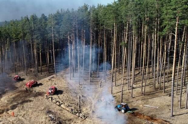 Площадь лесных пожаров в России за сутки выросла почти в 1,5 раза