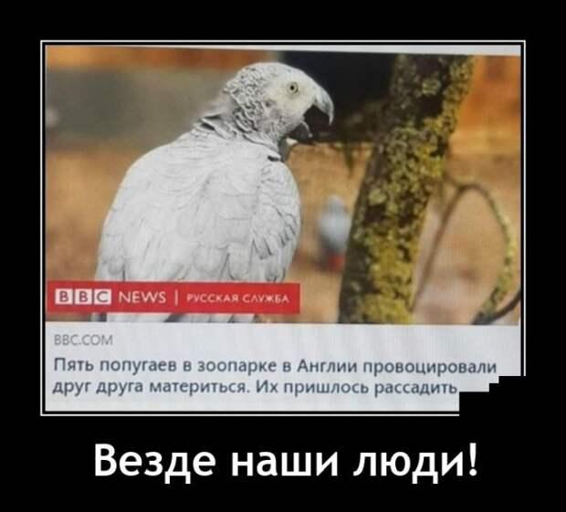 Демотиватор про попугаев