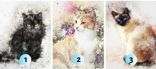 Визуальный тест с котами расскажет, какие секреты хранит ваше подсознание