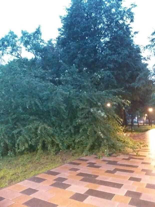В парке имени Федорова уберут сломанное дерево