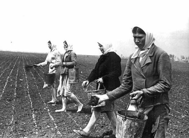 «Трудодни»: странная зарплата советских колхозников
