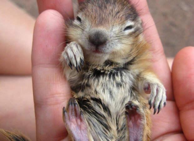 Не грустите: эти животные напомнят вам, что мир все-таки прекрасен