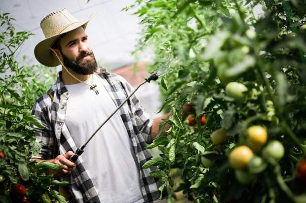Через сколько дней после обработки сада и огорода пестицидами можно есть урожай