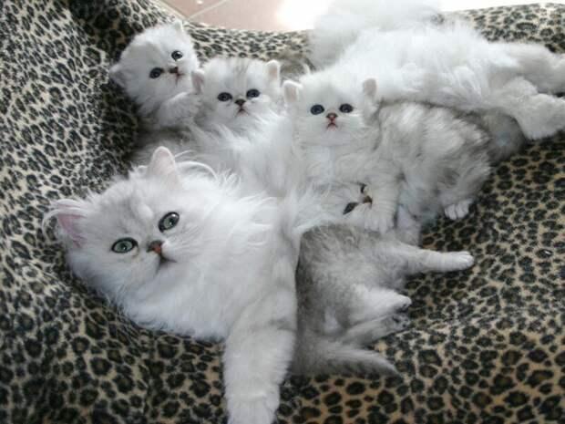23. Котята вашей кошки пушисты и забавны уже через неделю после рождения. жены, интересное, кошки, юмор