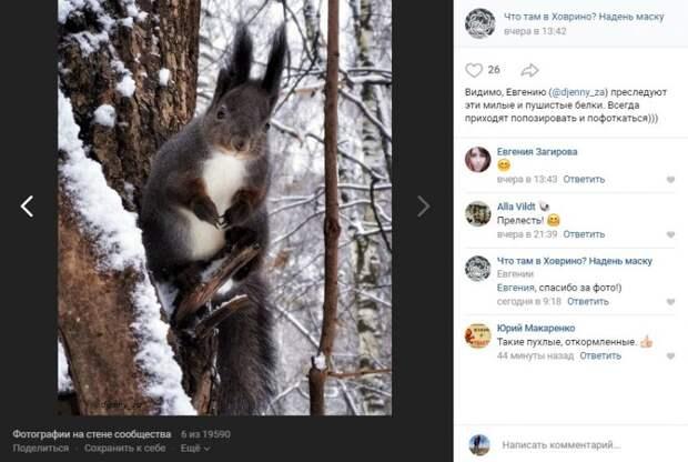 Фото дня: фотоохотница запечатлела откромленного грызуна в Химкинском лесопарке
