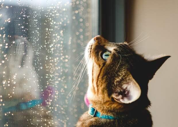 Кратковременные дожди пройдут в Удмуртии в среду