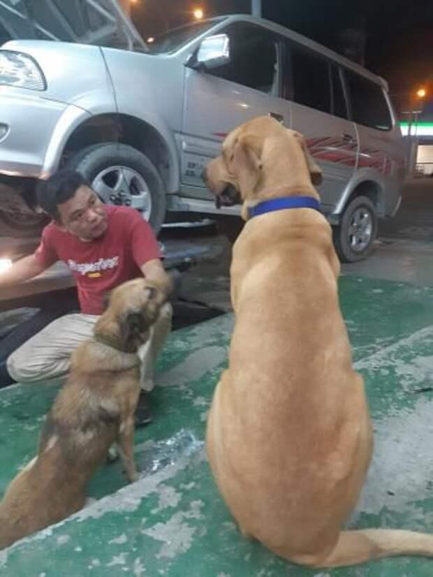Семье подарили милого щеночка, а вырос настоящий гигант размером 180 см