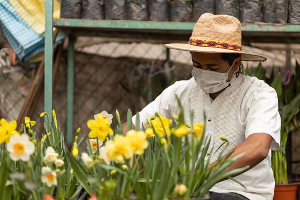 В Мексике одобрили законопроект о легализации марихуаны