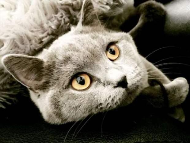Спасение кошки, съевшей 40 резинок для волос