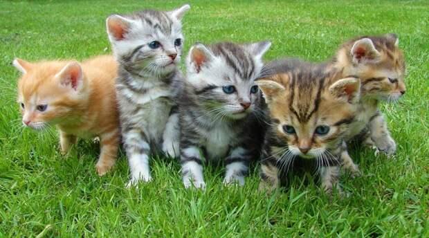 Раскрыт секрет вредных котов