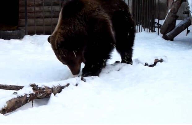 У омской медведицы Сони бессонница