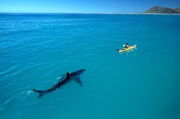 15 снимков, после просмотра которых ты в воду ниногой