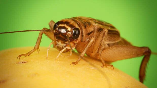 Немецкие ученые сделали открытие об эволюции насекомых