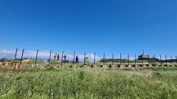 Выросший забор на землях древнего Херсонеса возмутил общественников Севастополя