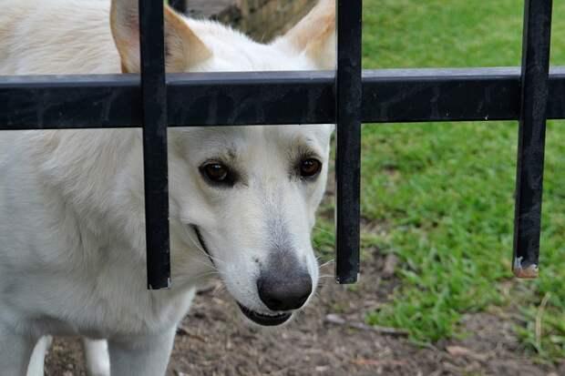 В Рязани собаку накормили битым стеклом