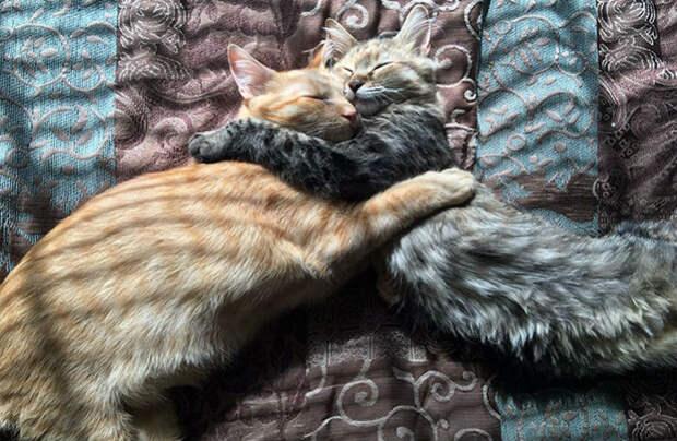 Два котенка влюбились друг вдруга ипросто немогут больше скрывать своих чувств
