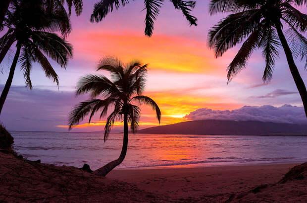 Пальма деревья, красота, природа